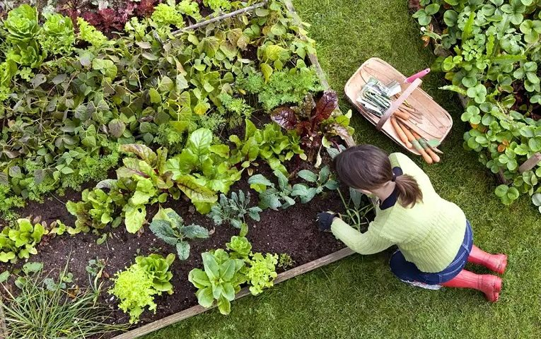 Top 10 Tips to Save Your Garden from Drought